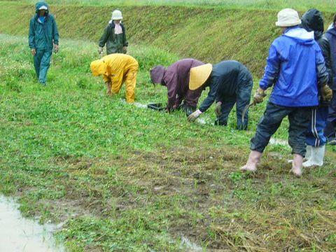 2012年6月16日大北農園 (10)