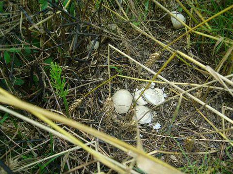 2012年6月23日 鳥?の卵 (1)