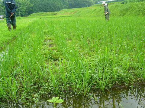 2012年7月14日大北農園 (3)