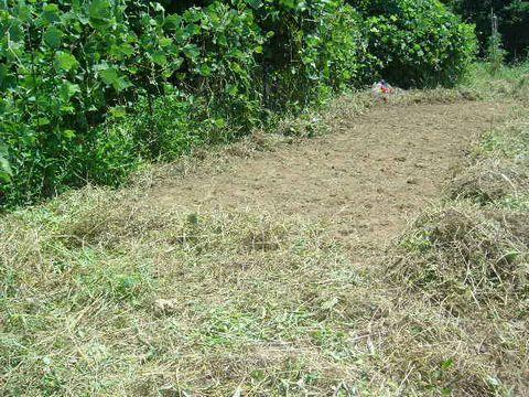2012年8月19日蕎麦の播種 (6)
