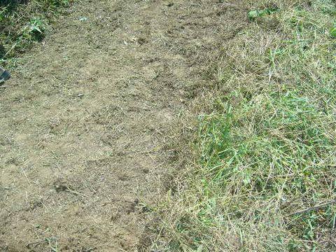 2012年8月19日蕎麦の播種 (2)