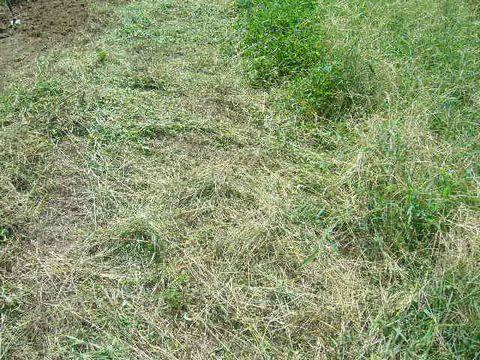 2012年8月19日蕎麦の播種 (1)