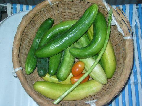 2012年8月22日今日の収穫