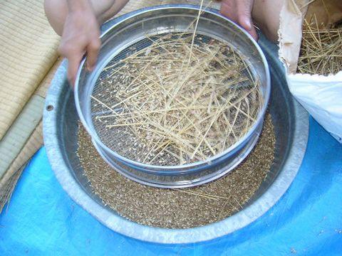 2012年8月2日小麦 (6)