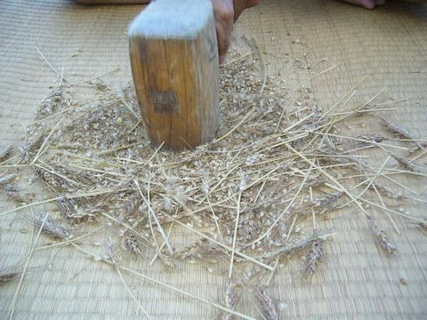 2012年8月2日小麦 (4)