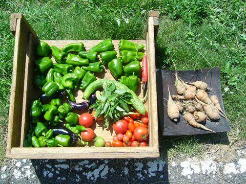 2012年9月8日あまつちひと自然農の学び (11)