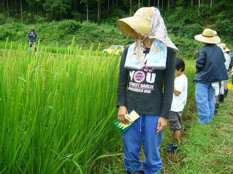 2012年9月8日あまつちひと自然農の学び (7)