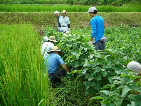 2012年9月8日あまつちひと自然農の学び (8)