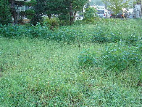 2012年9月17日留原自然農園にて (2)