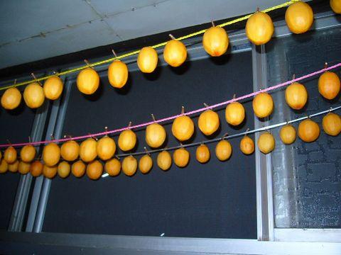 2012年10月19日西条柿 (4)
