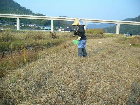 2012年10月30日世羅小麦条播き (1)