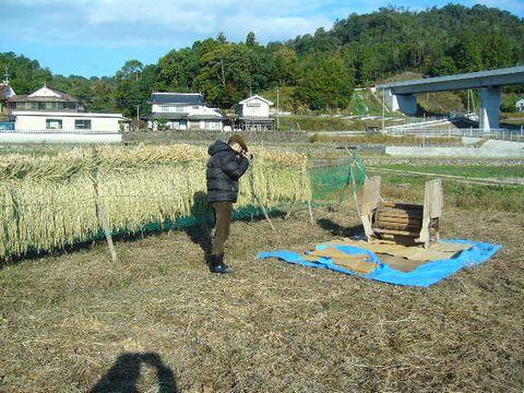 2012年11月2日稲刈り (1)