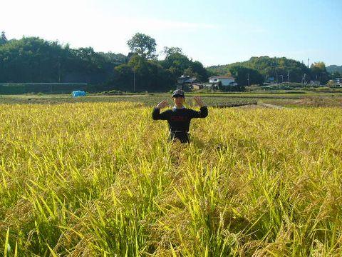 2012年11月3日世羅稲刈り (6)