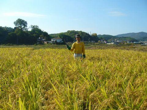 2012年11月3日世羅稲刈り (4)