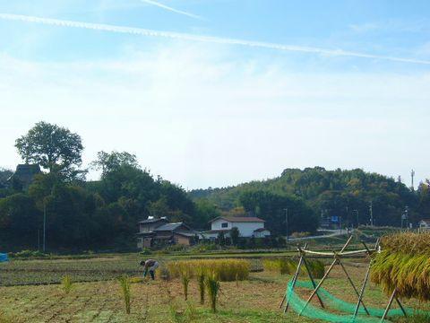 2012年11月4日世羅稲刈り (13)