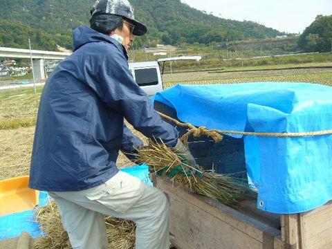 2012年11月4日世羅陸稲脱穀 (1)