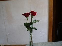 10 05-09 Haha Roses
