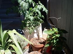 10 07-02 Porch Garden 1