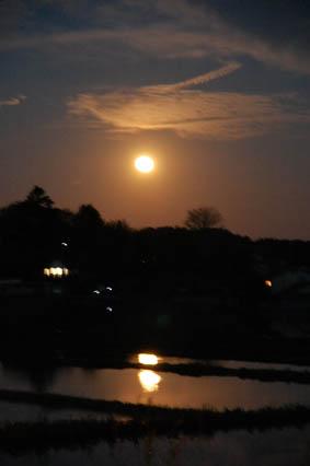 月夜と田んぼ
