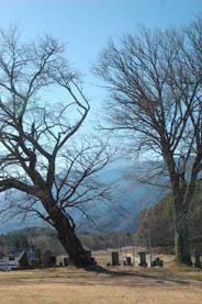 富士山とお墓3