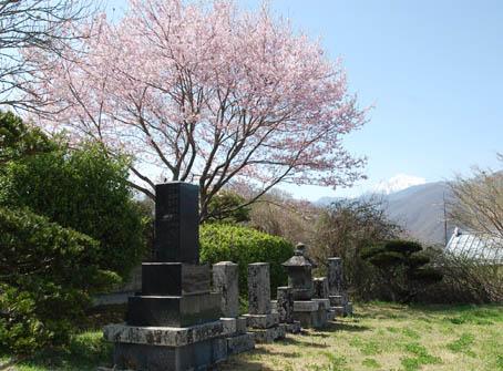 takamorisakura3.jpg