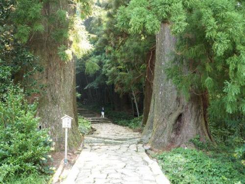 大門坂(樹齢800年の夫婦杉)