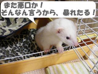 ヒョウ柄と健太郎1002-3