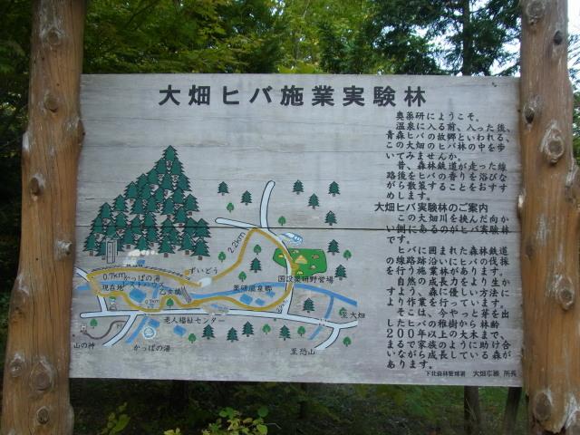 s大畑ヒバ実験林