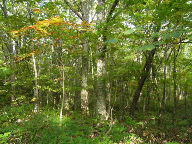 s薬研の森
