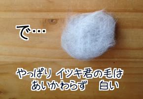 イツキの毛玉