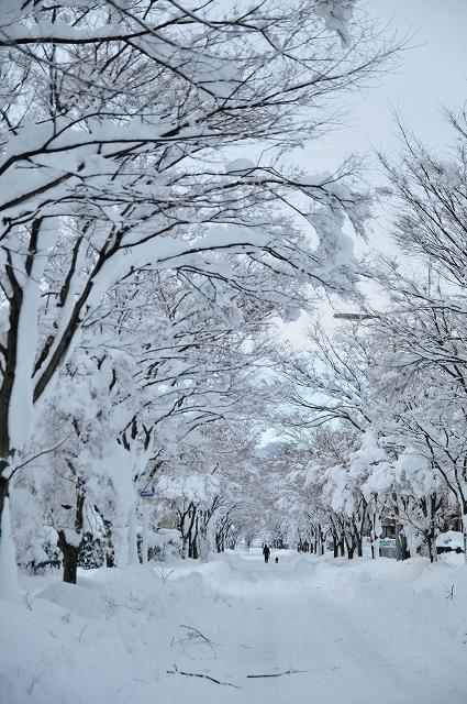 元旦の雪道