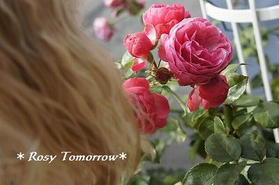 お庭の薔薇だー