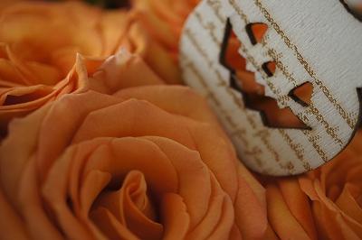 かぼちゃ色の薔薇2