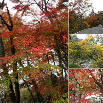 夏井川渓谷「紅葉ウォーキングフェスタ」1