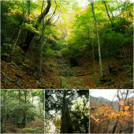夏井川渓谷「紅葉ウォーキングフェスタ」12