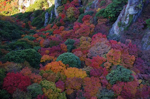 寒霞渓の谷間の紅葉