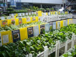 野菜苗駐車場