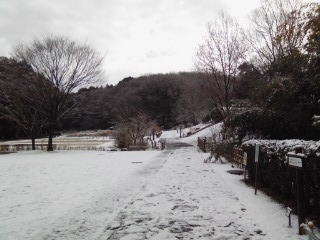 snow124