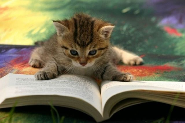 111129cat_books_640_01.jpg