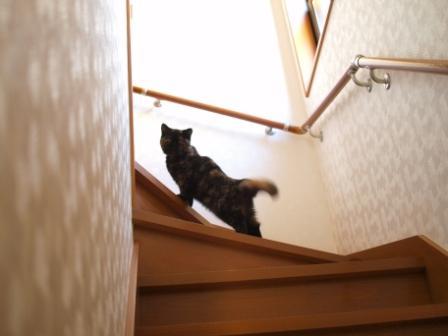 ママ来るかな?