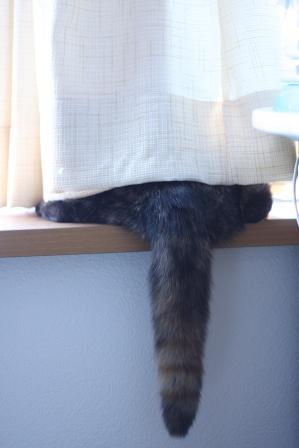 出窓でしっぽ