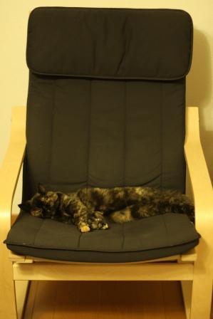 椅子ひとりじめ