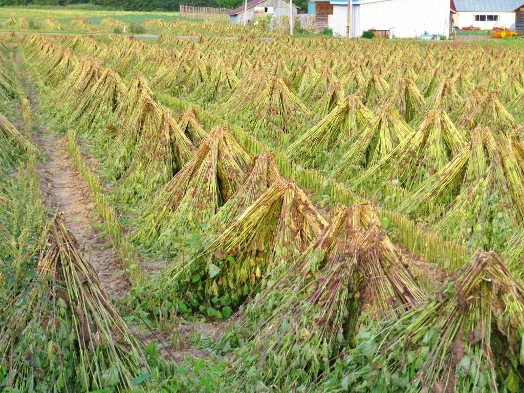 道東で見つけた畑 (1)