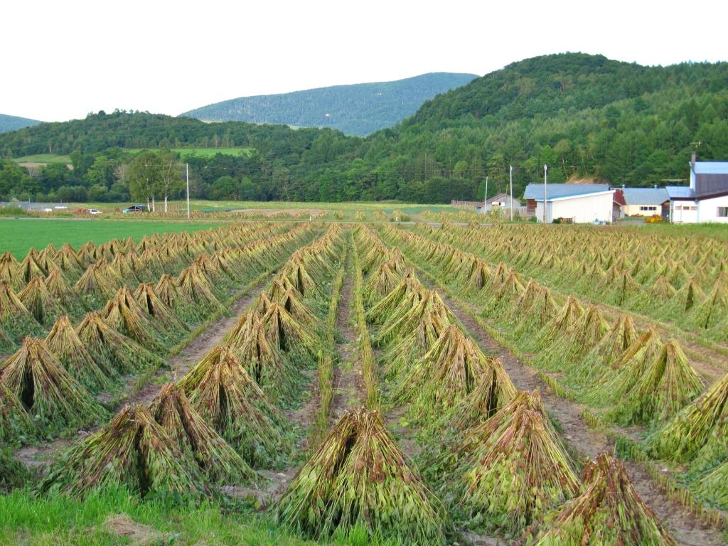 道東で見つけた畑 (2)