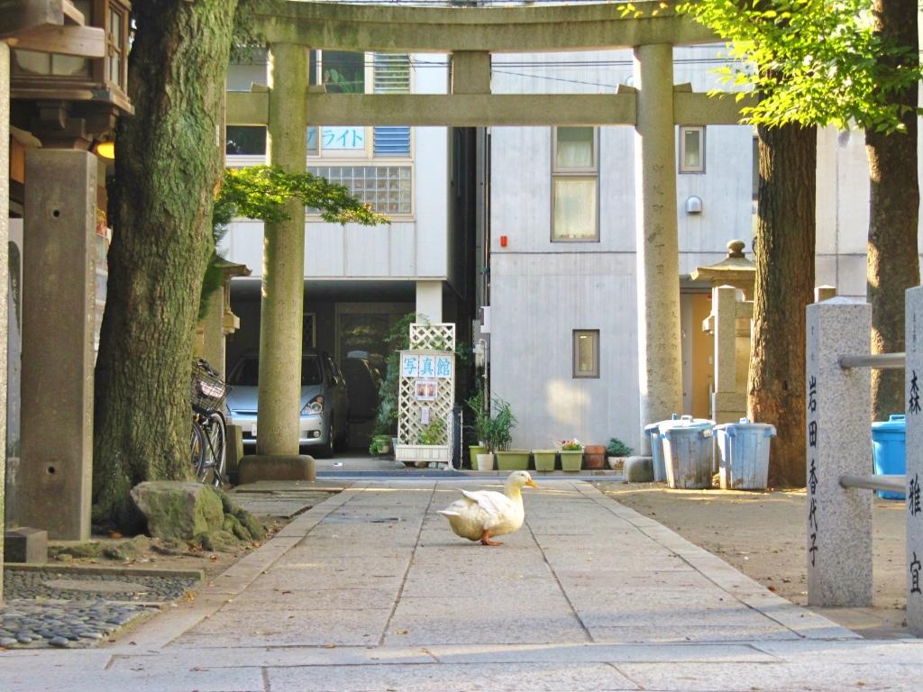 下谷神社 (3)