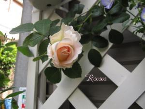 ロココ110509