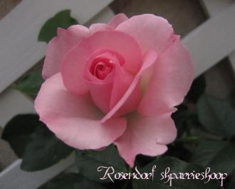 rosendorf110522-3_convert_.jpg