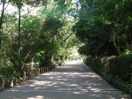 香川2011 135