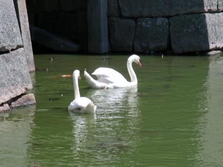 香川2011 126