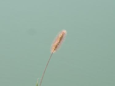 広沢池かかし 025